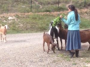 linde goats