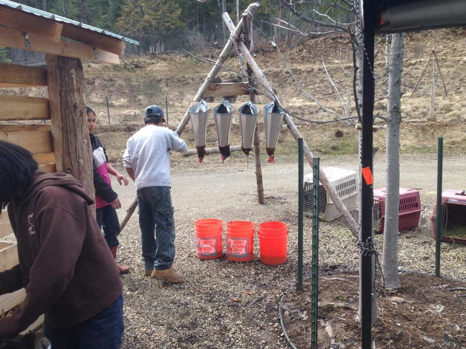 Poultry Processing is another stream of income at The Prepared Homestead