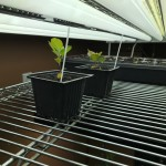 Propagating Trees from Seed
