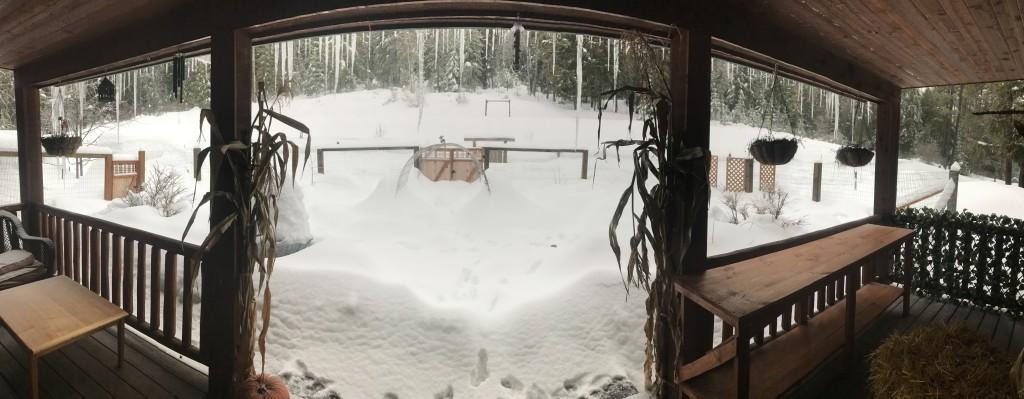 Culinary and Medicinal Garden Snowpocalypse!