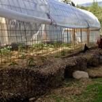 Control Pests Naturally – Grow Herbs