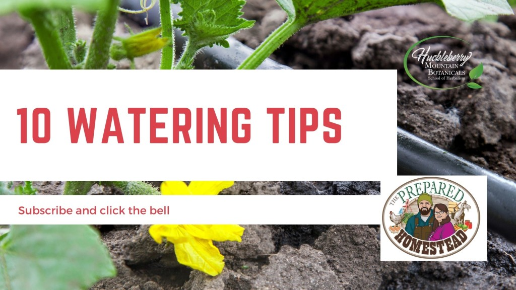 10 Tips for Watering Your Gardens