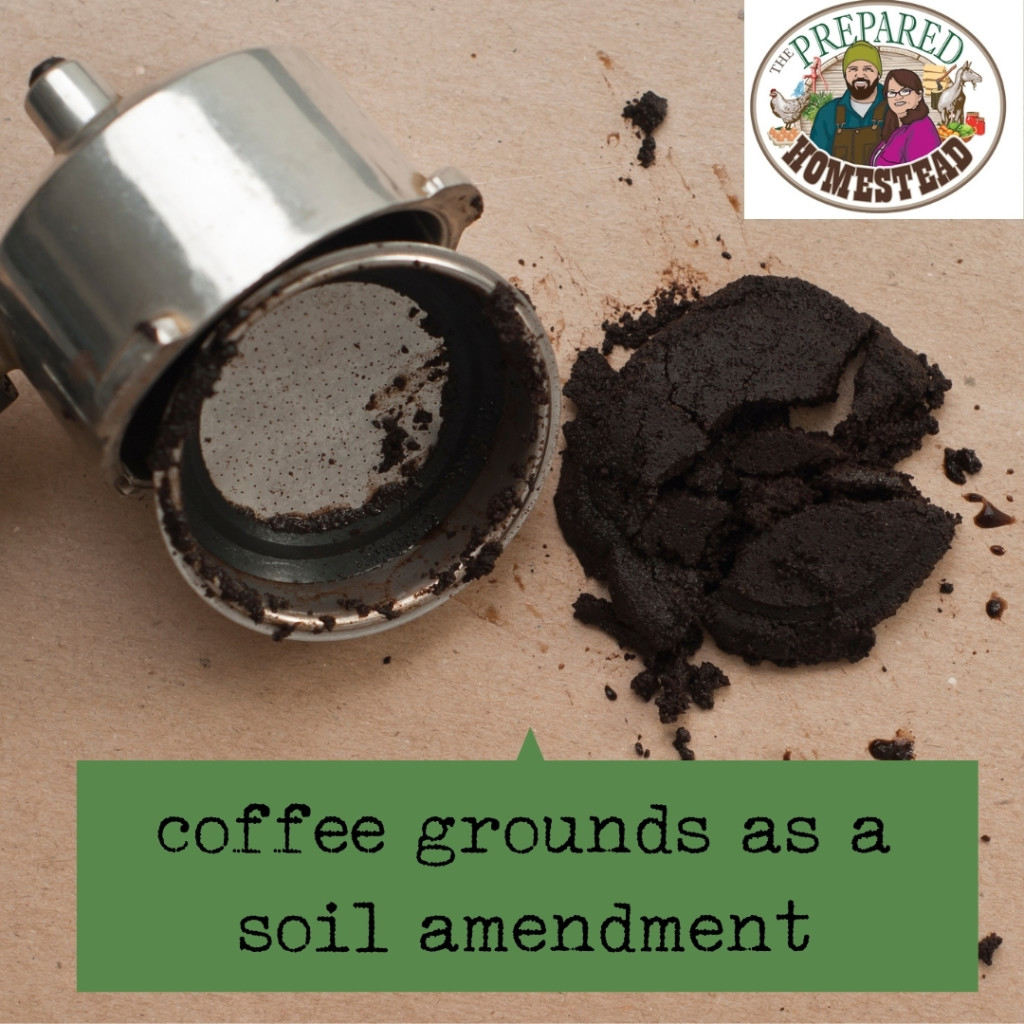 Using Coffee Grounds as a Soil Amendment